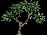 Baum/Mangrovenbaum