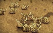 Büffelherde