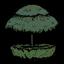 Странное зонтичное дерево