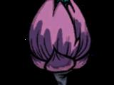 Морская водоросль