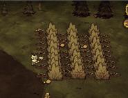 Ловушки на индюков