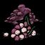 Сырые и жареные сочные ягоды