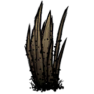 Чумная трава