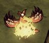 Redbird on fire