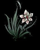 Магический цветок