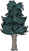 Чайное дерево