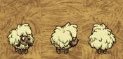 Lamb winter