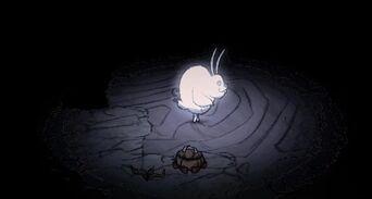 Заяц светится
