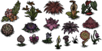 Exotic flowers (all)