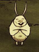 Радостный заяц