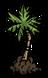 Саженец пальмы