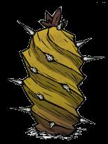Слоновий кактус
