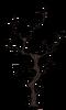 Старое ветвистое дерево