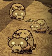 Plusieurs bébés boeufalos