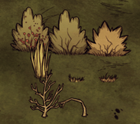 254px-Collectable plants (Berry Bush, Grass, Sapling)