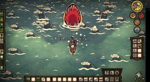 Requin tigre attaque