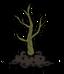 Саженец чайного дерева