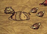 Детёныш бифало умер