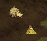 Овца в атакует!