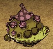 Toadstool Sleeping