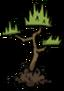Саженец дерева джунглей