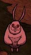 Заяц увидела игрока