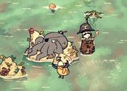Yaarctopus ig