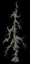 Old Petrified Tree