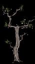 Среднее ветвистое дерево