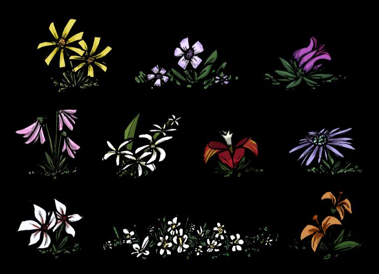 Разновидности цветков