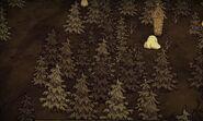 Узловатый лес