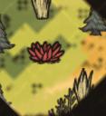 Цветок Абигейл на карте