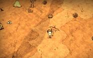 Desert ig