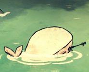 Baleine blanche morte 1