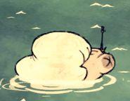 Baleine blanche morte 4