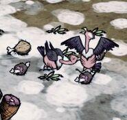 Buzzards fighting3