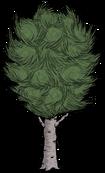 Каштановая берёза