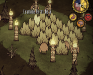 Pig Torches bushes