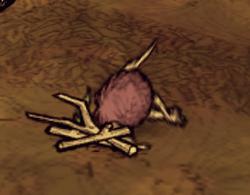 Birchnutter mort