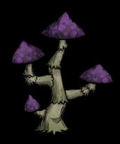 Chapeau à spore
