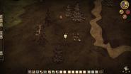 Грибы и плантация2