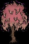 Сахарное дерево