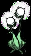 Double Light Flower