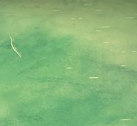 Ocean shallow