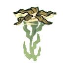Водоросли растение