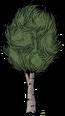Малая каштановая берёза