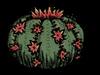 Цветок на кактусе