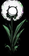 Single Light Flower