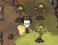 Семя дерева джунглей посажено