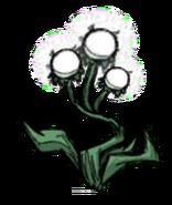 Triple Light Flower